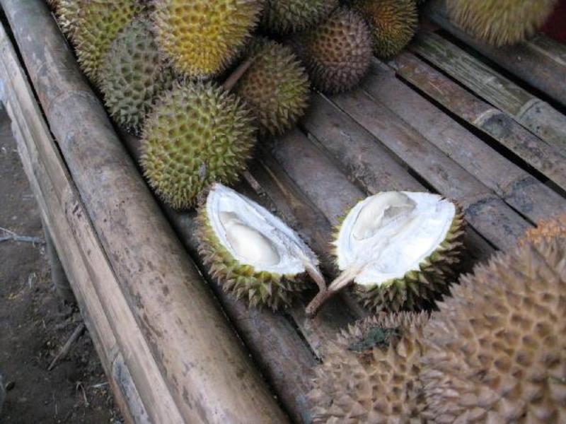 Durian fruit: at last!