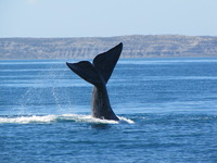 cape cod whale watching usa