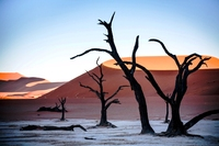 Deadvlei in the Sossusvlei Namibia
