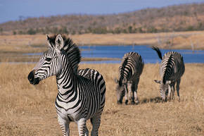 Rondreis Zuid-Afrika nationale parken, 18 dagen