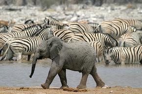 Rondreis Kenia, Tanzania & Kilimanjaro, 21 dagen kampeerreis