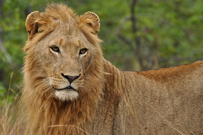 Rondreis Zuid-Afrika, Botswana, Zimbabwe, Zambia, Malawi, Tanzania & Kenia, 34 dagen