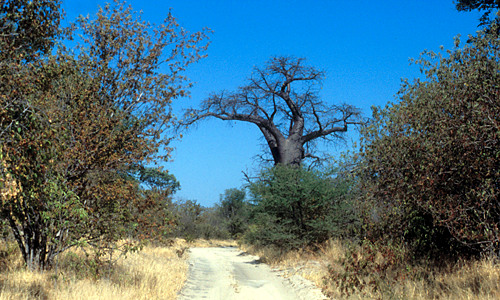 Chipata – South Luangwa –onverharde weg