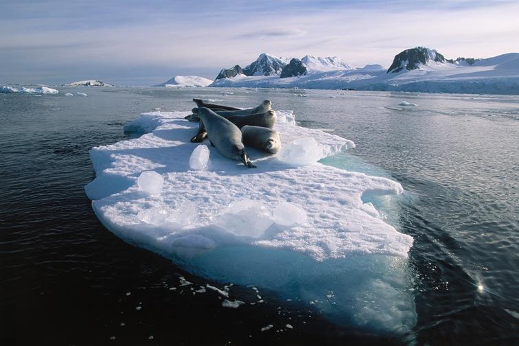 Sfeerimpressie Antarctica en de Zuid-Shetland eilanden