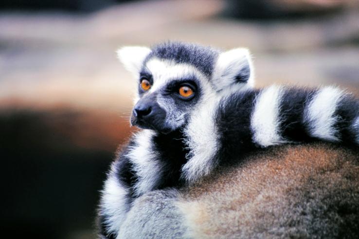 Sfeerimpressie Rondreis Madagascar & Mauritius