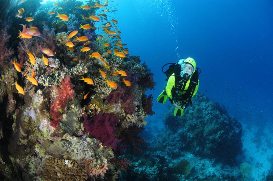 Korallenriff am Roten Meer, Ägypten, Djoser Reisen