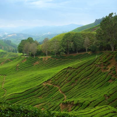 Rondreis West-Maleisië & Borneo, 20 dagen afbeelding