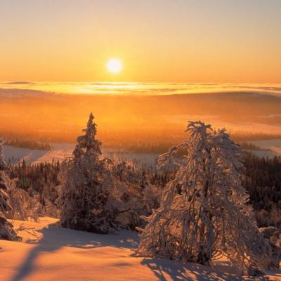Natuurreis Finland, 6 dagen