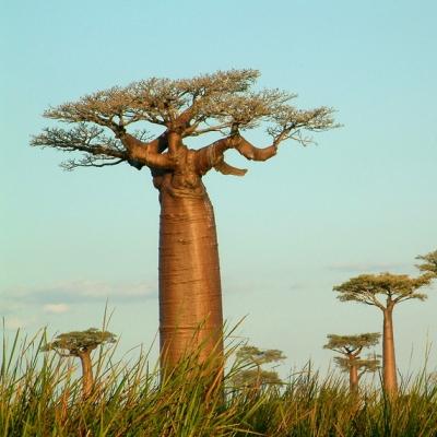 Rondreis Madagascar, 26 dagen