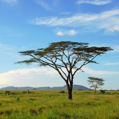 Rondreis Kenia, Tanzania Zanzibar, 21 dagen hotel lodgereis