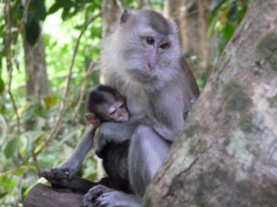 Thailand malesie en Singapore regenwoud aap Djoser
