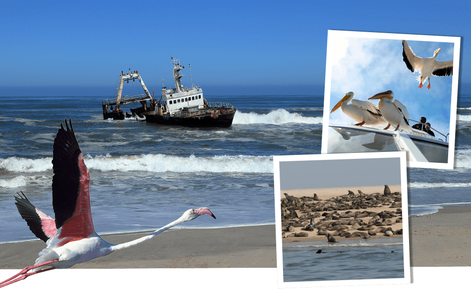 mag_nj18_header_skeleton_coast_1