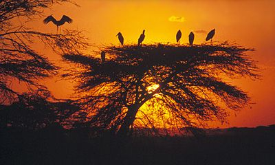 Eclipsreis Kenia Hotel Lodge, 21 Dagen